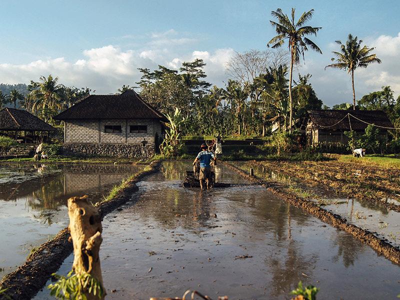 Kenyan farmer at work
