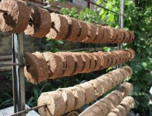 No More Wood:  Piloting Biomass Briquettes in Tanzania
