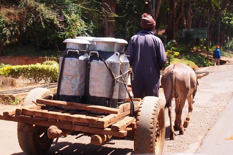Cameroonian farmer