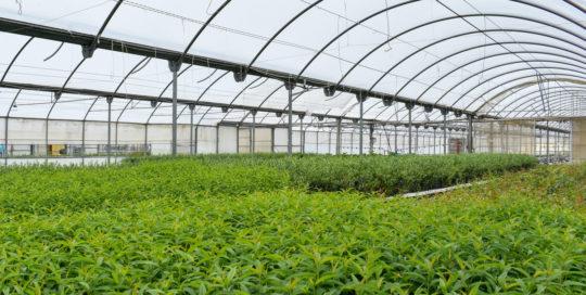 Agriculture Water Energy Nexus